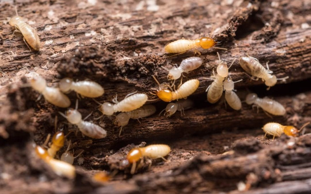 Damaged wood is one of the more obvious signs of termites
